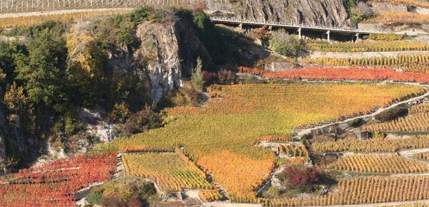 Bétrisey Vins